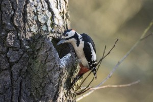 Topkapning sikrer biodiversitet