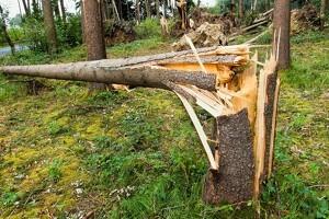 Sønderjylland har fået over 1,5 millioner nye træer
