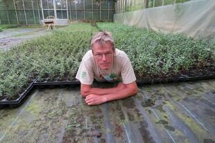 Planteskole sælger alt på auktion