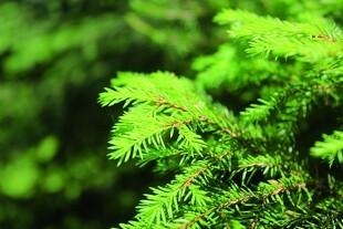 BioNutria giver næring til juletræerne