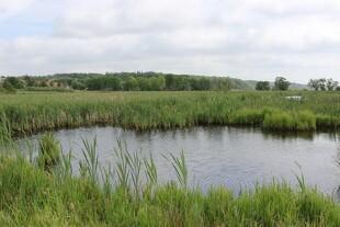 13.000 hektar vådområder er på vej