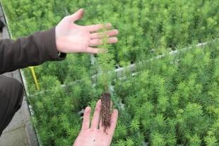 Færre arbejdsgange sikrer billigere planter