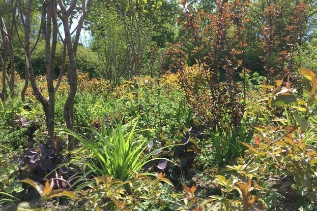 I Artstemaet Klima har både buske og bundplantning varme farver i blade, frugter og blomster. Som de øvrige plantninger er der 3 etager af buske som kan opnå højder af henholdsvis <1m, 1-3m og >3m. Pressefoto.