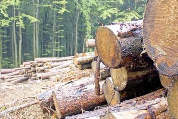 Vismænd foreslår store dele af skovbruget nedlagt