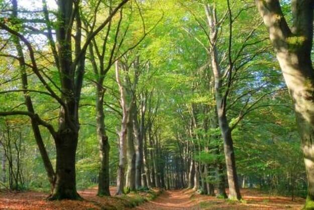 Skovrejsning: Fristen er forlænget