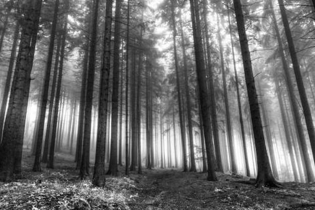 Skoven mangler gamle træer