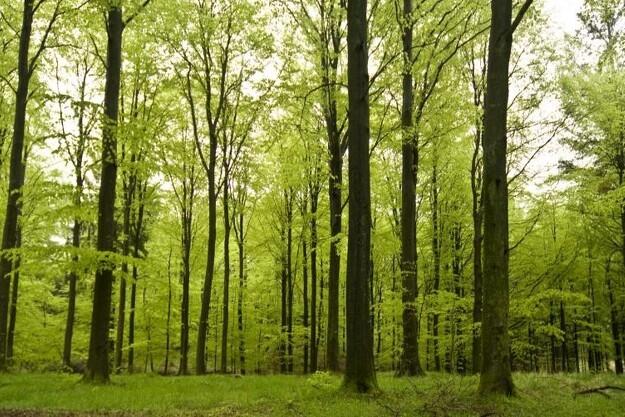 Millioner klar til flere skove