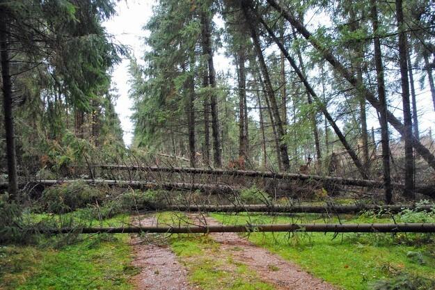 Orkanskove får løvtræindsprøjtning