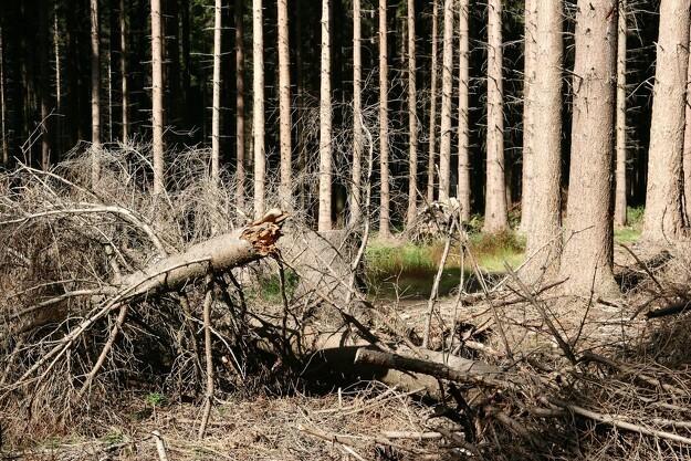 Kraftige storme giver bedre skove