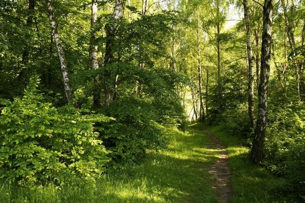 Skovrejsning for klimaets skyld