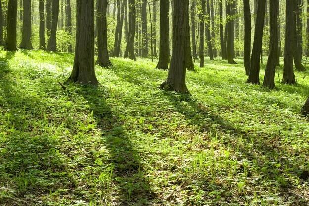 100 hektar skov skal beskytte grundvand