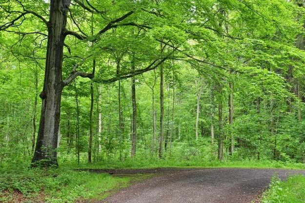 Universitetssygehus planter ny skov