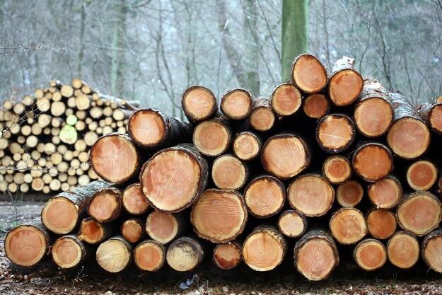 Skovdyrkerne øger omsætningen for femte år i træk