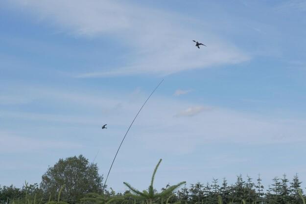 Drage skræmmer fuglene væk