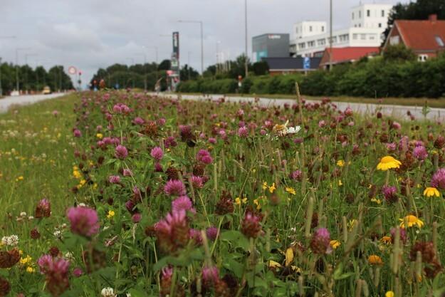 Aarhus vil have blomster langs vejene