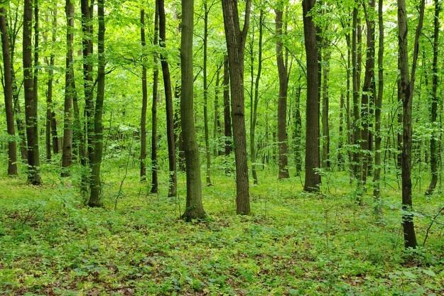 Privat skovrejsning får et boost