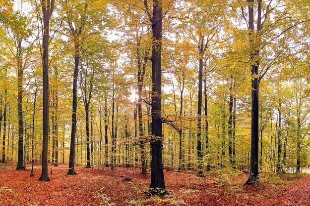 Organisationer glæder sig over udskudt skovlov