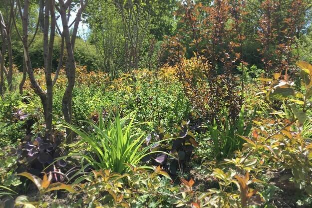Have & Landskab vil forløse buskens enorme potentiale