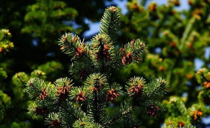 Svensker sætter rekord i træplantning