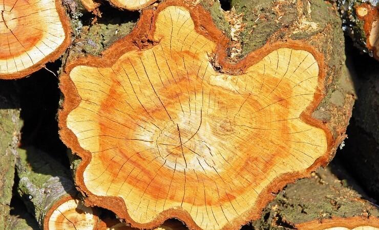 Skat ændrer afgørelse om fradrag for skovdrift