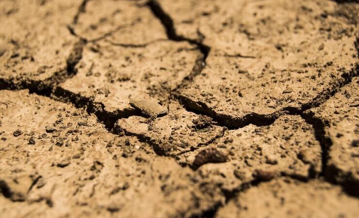 Skoven lider i rekord-tørke