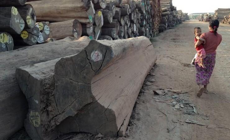 Ny viden om ulovlig skovhugst