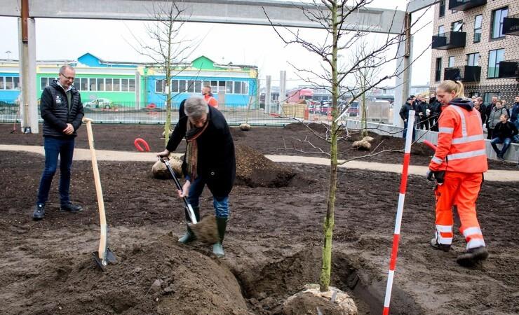 De første træer plantet ved Grønttorvet