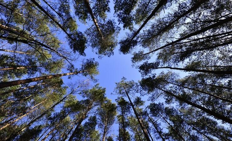 Ny hjemmeside samler viden om skovbrug