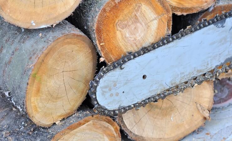 Træ bidrager med 77 milliarder kroner til samfundsøkonomien