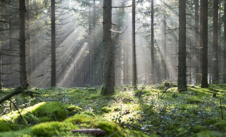 Troldtekt slår på tromme for træ