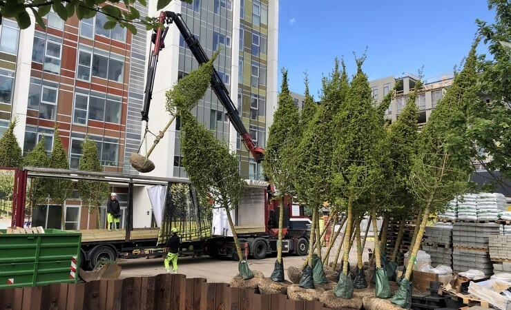 Grøn kile giver plads til 95 nye bytræer
