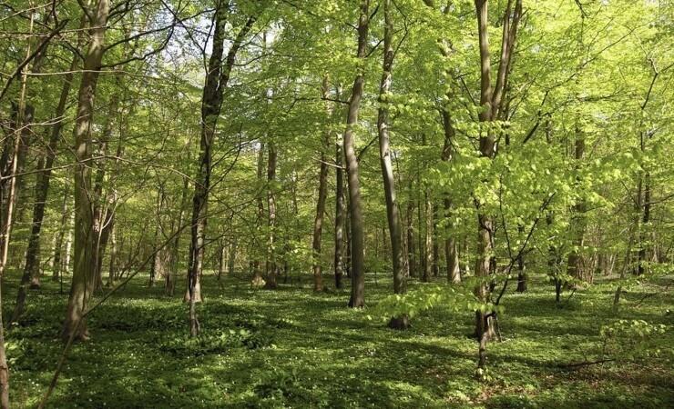 Træerne får fokus på Fagligt Forum