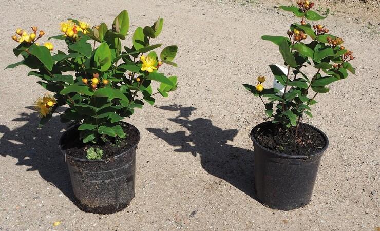 Der kommer strammere standarder for planter