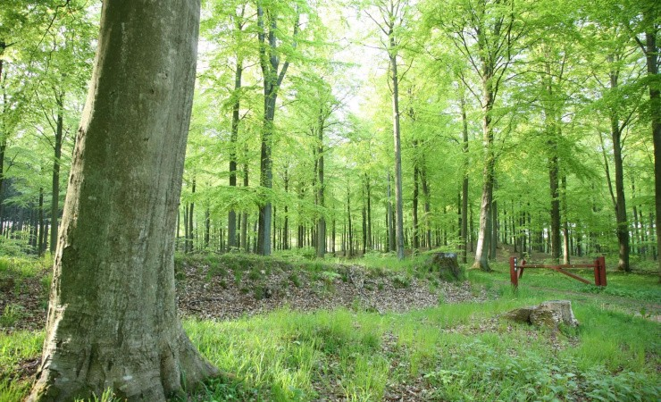 Miljøministeriet skaber vrede hos skovfolket