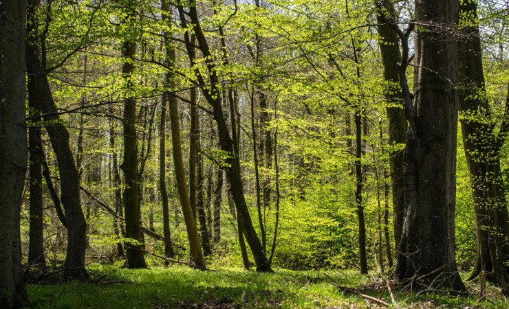 Indsamling gav knap en million træer
