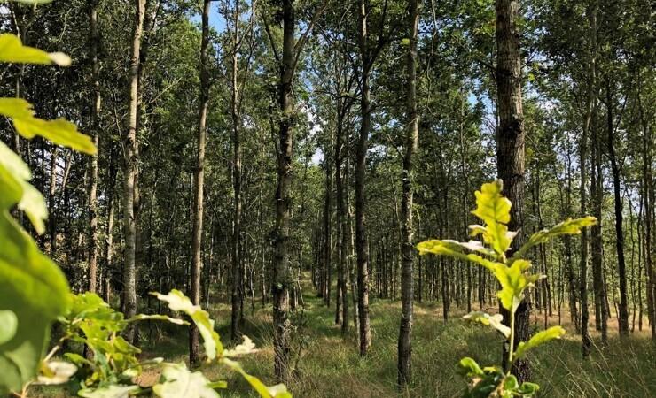 Verdo overtager 39 hektar skov nær Randers