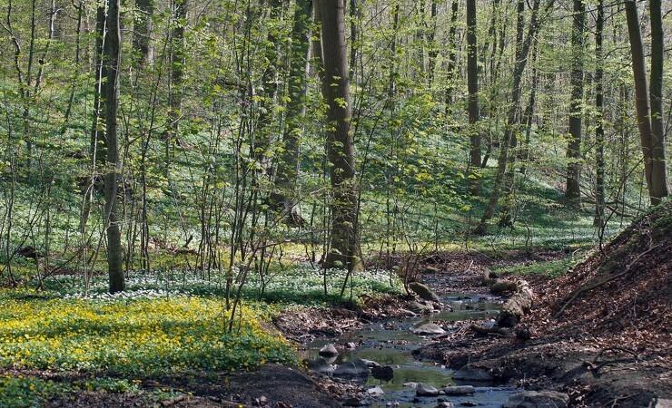 Gribskov kan få radikalt reservat