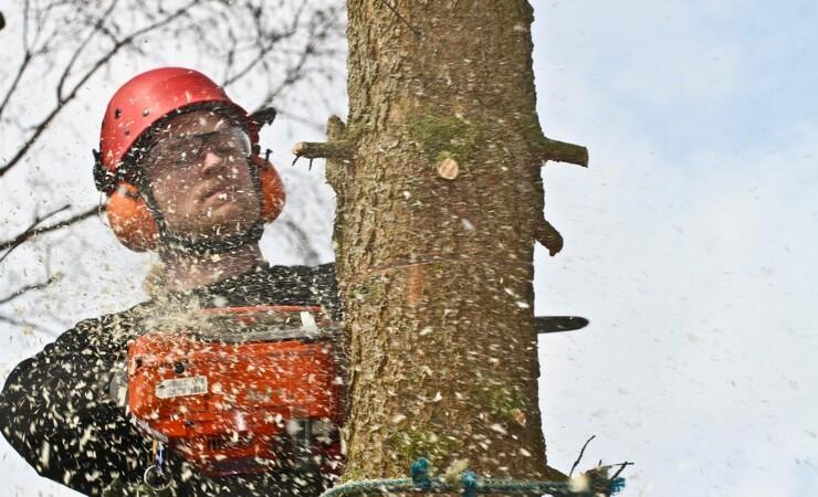 Miljøminister stopper udlicitering af skovarbejdere