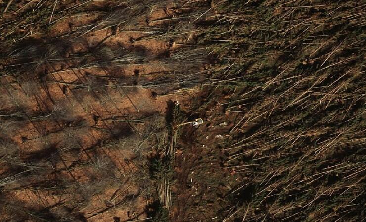 20 år efter: Orkan hjalp statsskovene