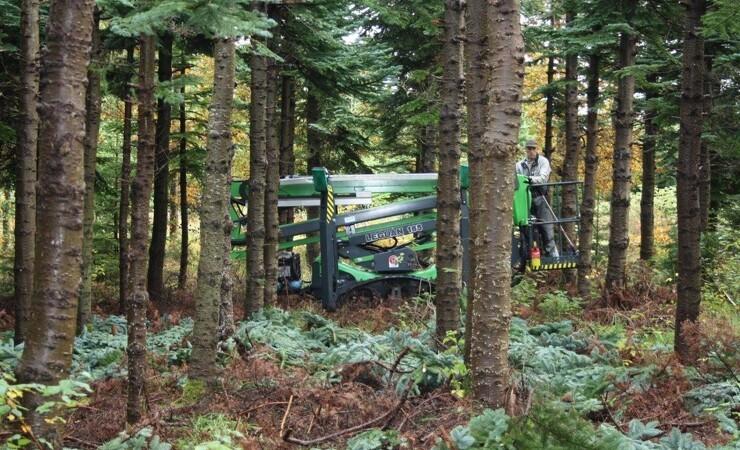 Juletravlhed hos skoventreprenører: Manøvredygtige lifte sparer tid