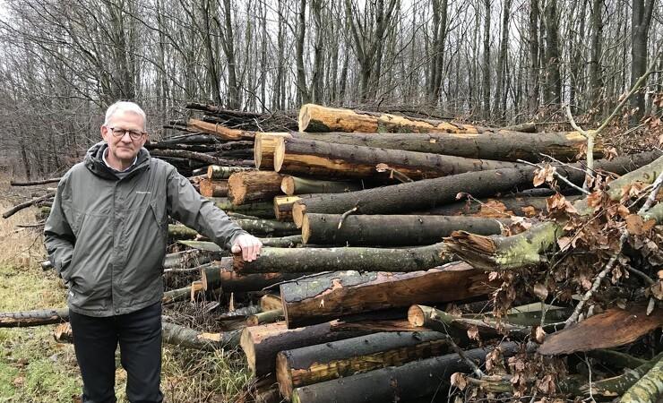 Byggetrend kan blive en lysning for presset skovbrug