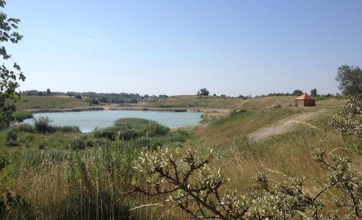 Biodiversiteten blomstrer i Pederseje Grusgrav
