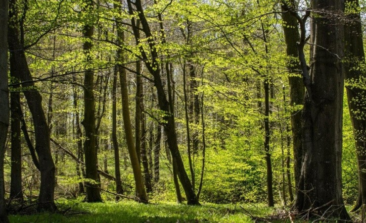HedeDanmark: Energipolitik nedsætter skovenes CO2-sugeevne