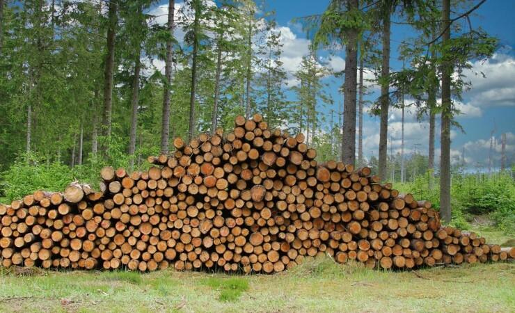 Byggeriets efterspørgsel kræver mere certificeret træ