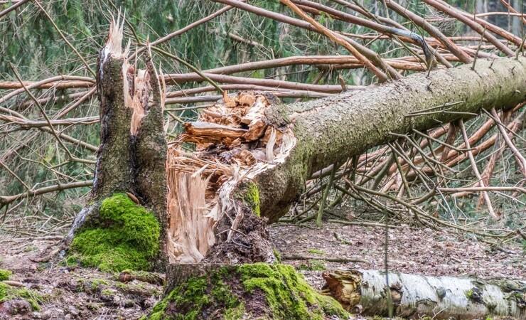3000 døde træer skal give tog-pendlere en naturoplevelse