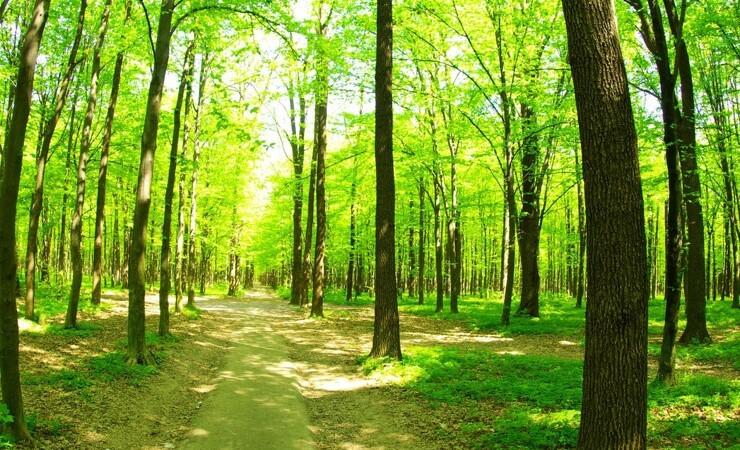 Bredt flertal stemmer for nye naturnationalparker