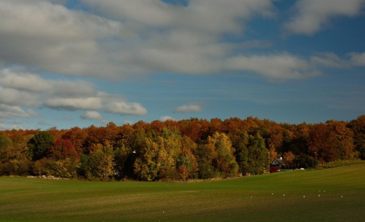 Flere hundrede nye skove på vej