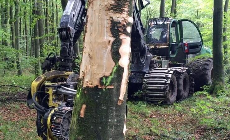 Naturstyrelsen skader træer med vilje