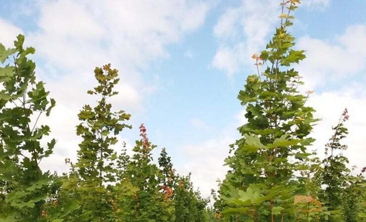 Nu plantes der træer i statens første folkeskove