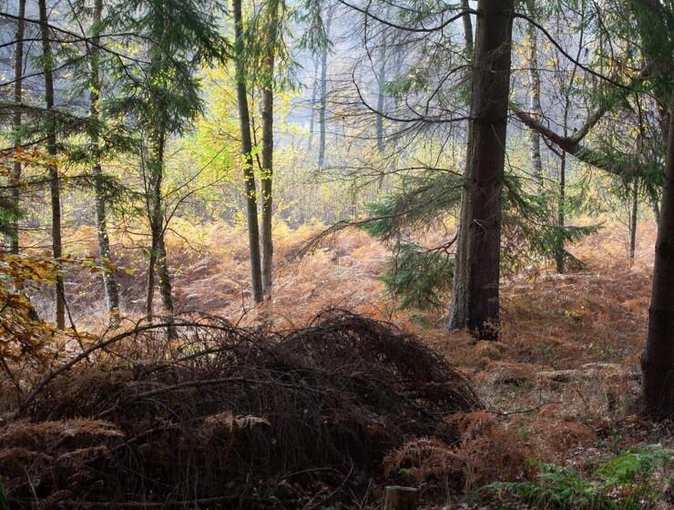 Største danske skovområde nogensinde bliver nu til vild natur